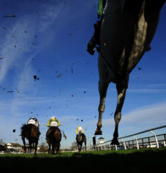 Runners take a flight in the home straight - RACE 3 - 13.40 - Bet totequadpot Text Tote To 89660 Beginners« Chase - PHOTO mandatory by-line: Dan Mullan/Pinnacle - Photo Agency UK Tel: +44(0)1363 881025 - Mobile:0797 1270 681 - VAT Reg No: 768 6958 48 - 29/11/2012 - EQUESTRIAN - HORSE RACING - Taunton Racecourse, Taunton, Somerset